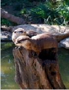 Le Zoa Parc Animalier et Exotique